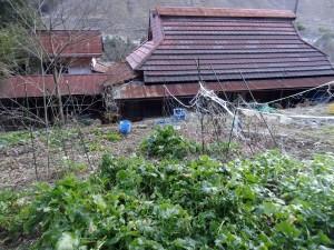 古民家裏の畑